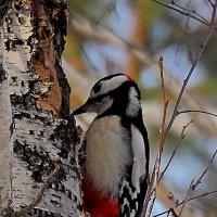 Выполняю любые работы по дереву.... :: Аркадий Иваковский