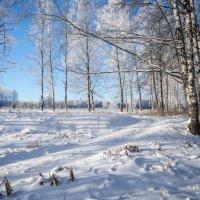 Зимний пейзаж. :: Дмитрий Постников