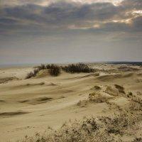 Весна, дюны Куршской косы. :: Виталий Латышонок