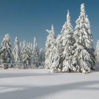 снежная тишина :: дмитрий посохин
