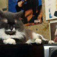 Дремлющий кот :: Николай Холопов