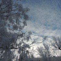 морозное утро :: Евгения Чередниченко