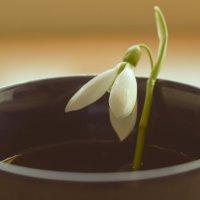 Весна пришла! :: Karolina