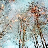 Ренуар в осенней луже :: Валерий Розенталь