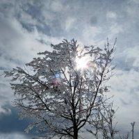 Ажурное изделие,зимы украшение :: Наталья Джикидзе (Берёзина)