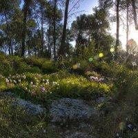 Зимний Израильский лес :: Ефим Журбин