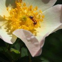 Из жизни муравья...5 фото :: Swetlana V