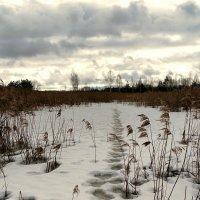 Последний день зимы :: Милешкин Владимир Алексеевич