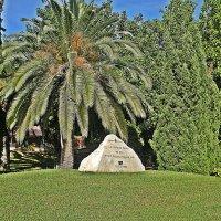 Palma без  пальмы не  возможна . :: Виталий Селиванов