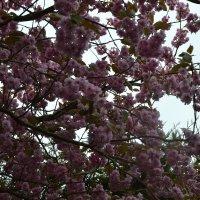 Весна пришла ! :: zoja