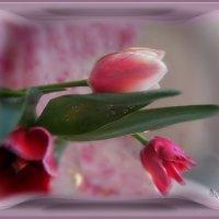 Вы чувствуете, в воздухе Весна разлила ароматы ожиданья? :: Людмила Богданова (Скачко)