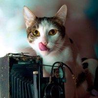 Фото на аватарку :: Albina