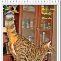 1 Марта - Всемирный День Кошек :: muh5257