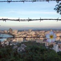Таиланд,Паттая :: Евгений Мергалиев