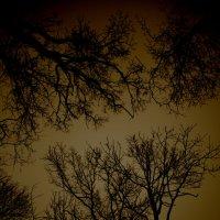 Без солнца :: Мария Драницына
