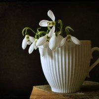 Белые цветы :: Галина Galyazlatotsvet