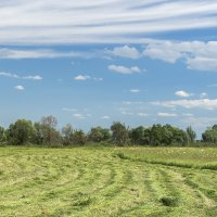 Покос травы :: Игорь Сикорский