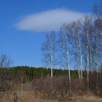 Весенний лес :: Вера Андреева