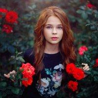 Розы :: Сергей Пилтник