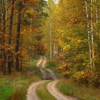Дорога в осенний лес :: Natali8163 *