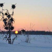 Солнце клонилось к закату... :: Иван Сурков