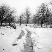 Пейзаж с проталиной :: Сергей Тарабара