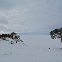 На высокой точке Дюн Белого моря. Ягры, Северодвинск. :: Михаил Поскотинов