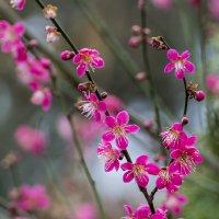 Весеннее цветение :: Valentina M.