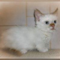 Милый, ласковый мой котик... :: Людмила Богданова (Скачко)