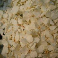 цветы :: Александр Попков