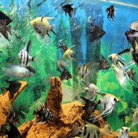 Рыбий переполох :: Татьяна Ломтева