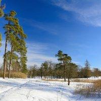 Зимний пейзаж :: константин Меркулов