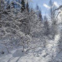 все оттенки снега уходящей зимы :: сергей