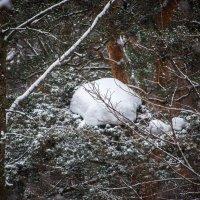 Много снега. :: Владимир Безбородов
