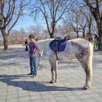 Одесский ковбой на Приморском бульваре. :: Вахтанг Хантадзе