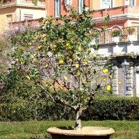 Весенний Рим :: Veselina *
