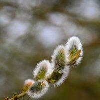 Весна пришла... :: Kapris VS