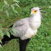 птица- секретарь :: Александр Михайлов