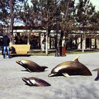 Дельфины в Одессе ) :: Людмила