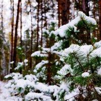 Ранний снегопад :: Сергей Царёв