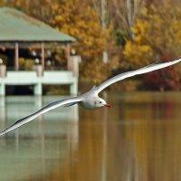 Полет чайки :: Светлана