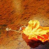 Осенний кораблик :: Алекс Исаенко