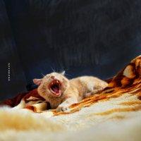 не ори,а то помрёшь! :: Роза Бара