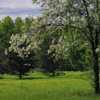 В начале июня - весна... :: Екатерина Торганская