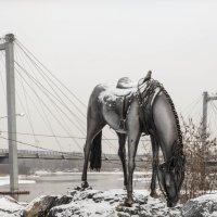 лошадь Мюнхгаузена :: XDЩерED 1186