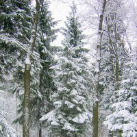 В снегу. :: Miko Baltiyskiy