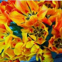 Тюльпаны :: Galina Leskova