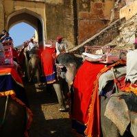 катание на слонах в городе Амбер в Индии :: vasya-starik Старик