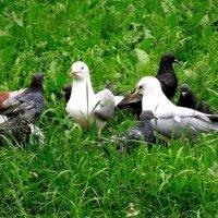 Чайки и голуби. :: Ираида Мишурко