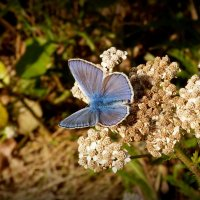 цветы крылатые и земные 4 :: Александр Прокудин